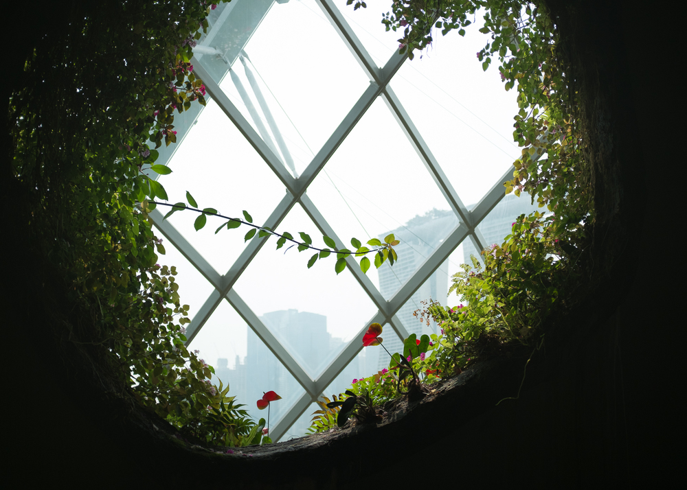 Window Vine, Singapore, 2015