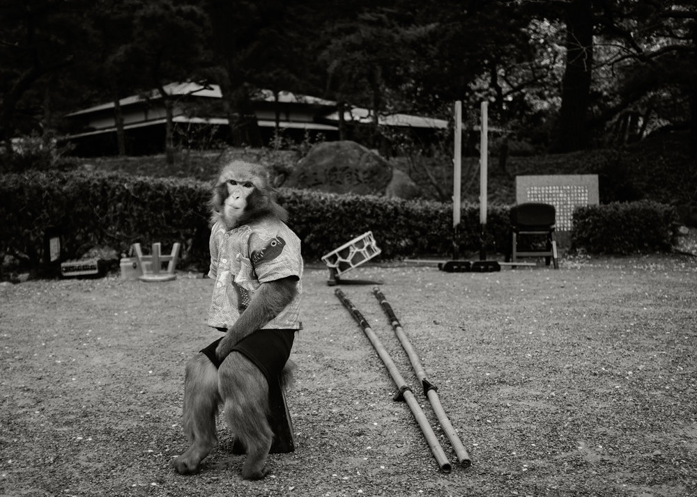 Performing Monkey, Japan, 2014