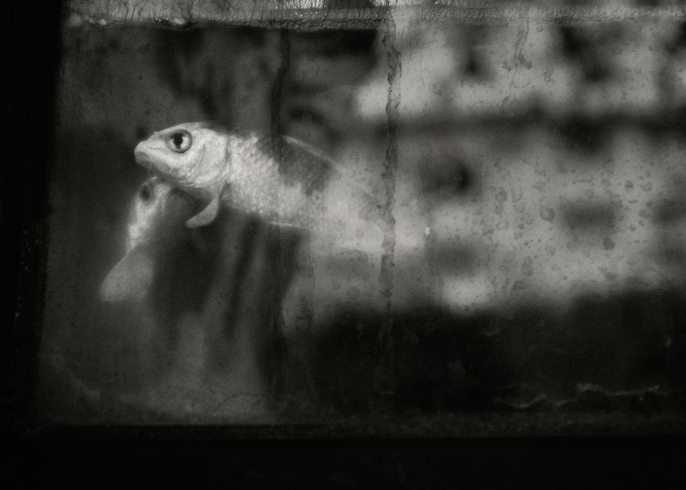 Fish, Zushi, 2016