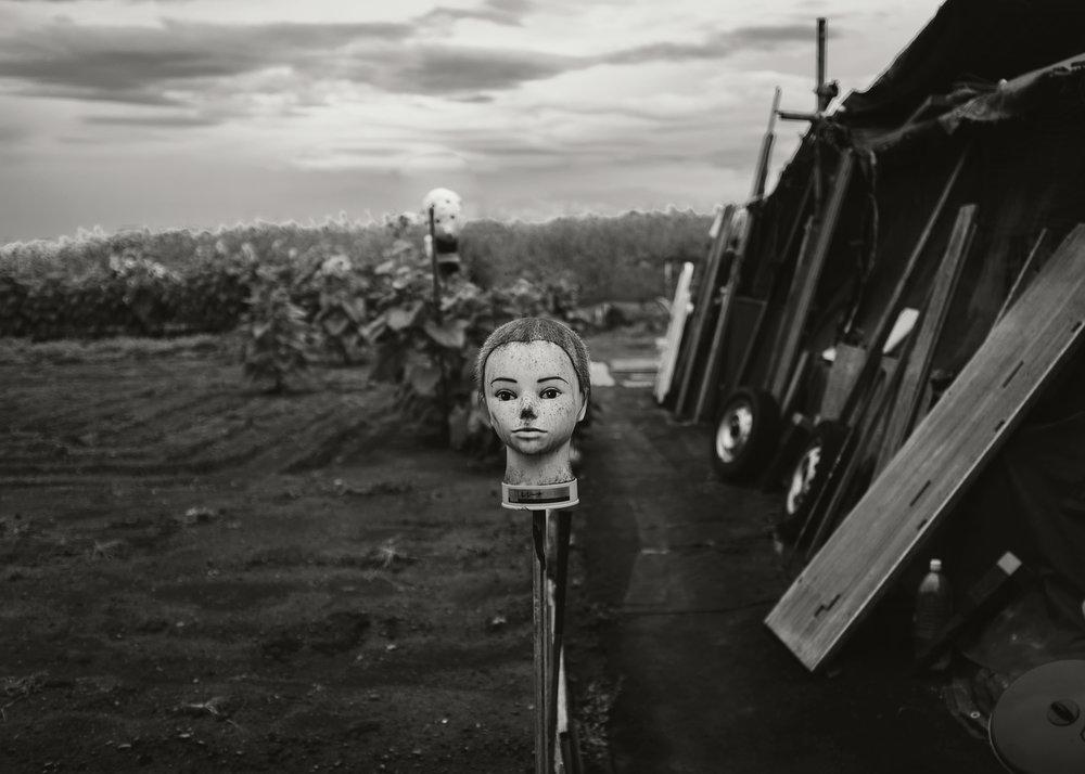 Scarecrow, Zama, 2015