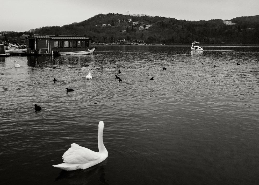Swan, Gotenba, 2016