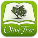Olive Tree.jpeg