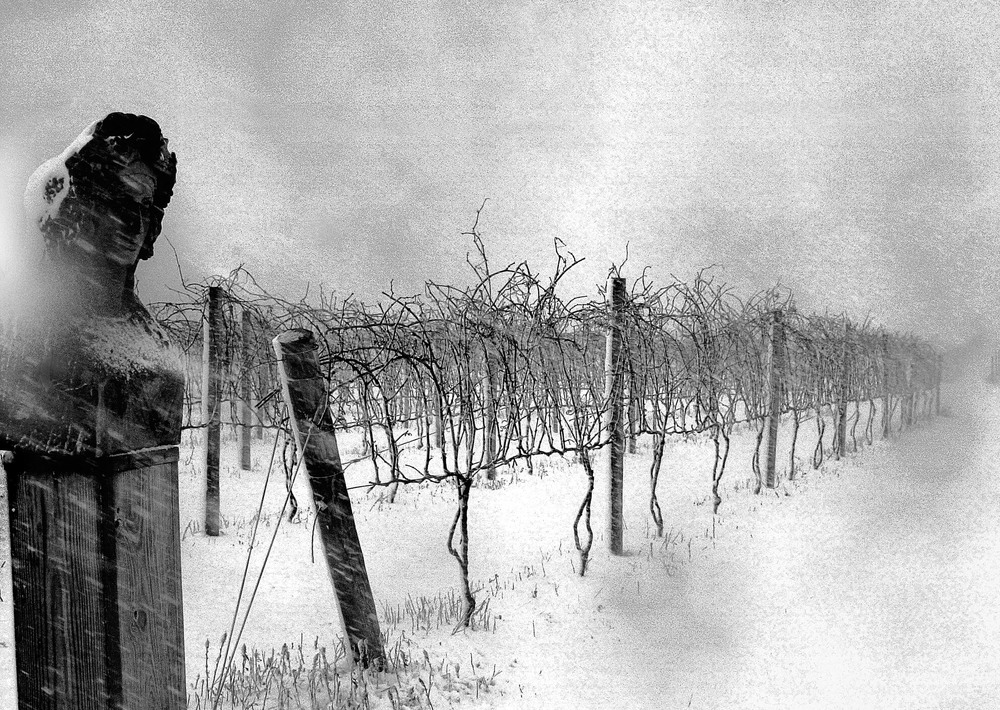 17_Vineyard_Blizzard_Statue 20x24 BW copy.jpg