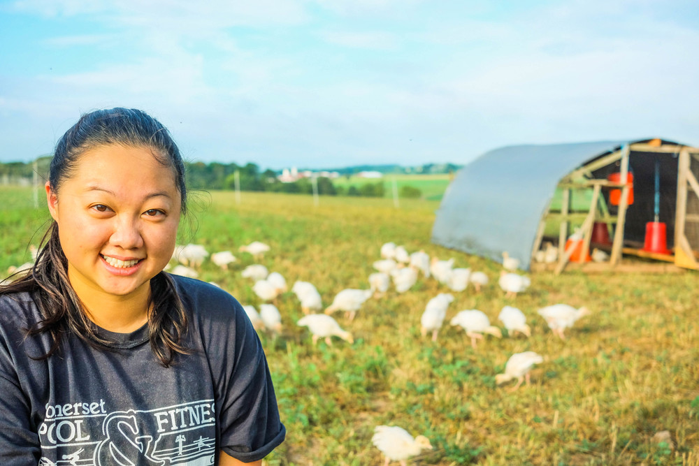 Farm hand Angela Lin watering the young turkeys at Lima Family Farms. Photo by Derek Vaughan Brown