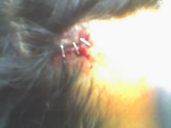 Guitar injury: Thejus' head bled all over the stage of Ten Car Pile Up during a gig. He did NOT stop playing.