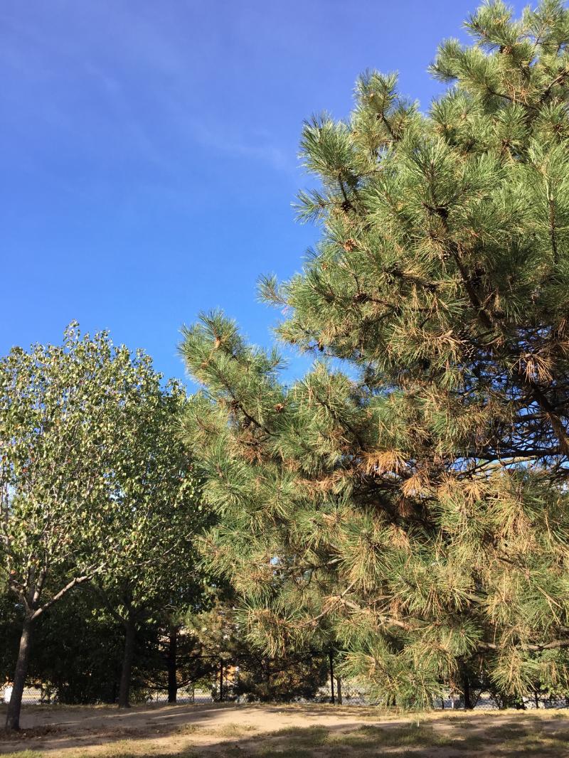 Galvin Memorial Park :: september 2015