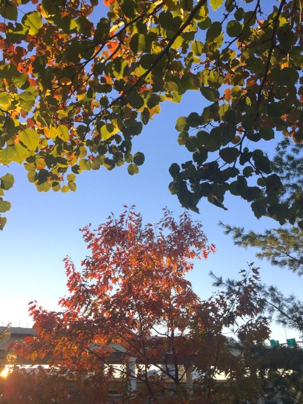 trees at Galvin Park :: Charlestown, Massachusetts