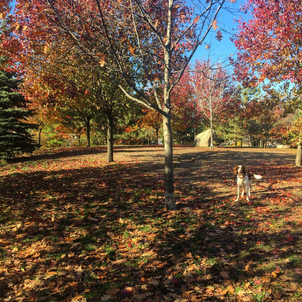 at the park with indie :: saturday, november 19, 2016