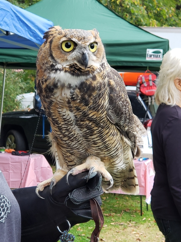 october 7, 2018 :: Met this fellow at the Smuttynose Brewing Outdoor Expo. I did not ask him how many licks it takes to get the center of a Tootsie Pop.