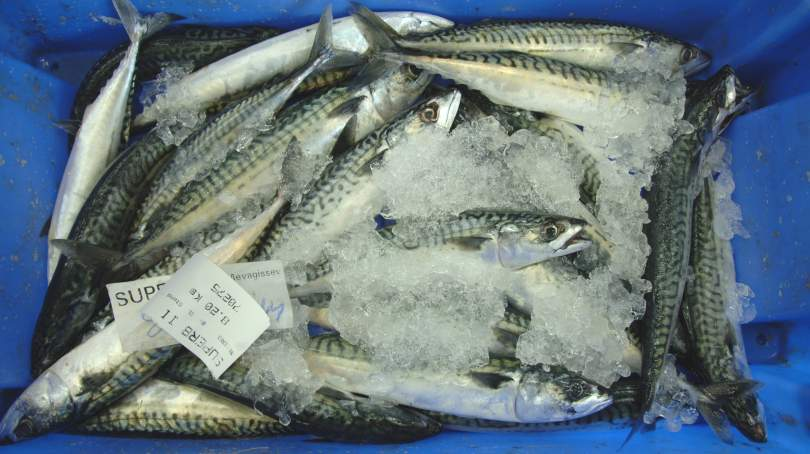Fresh fish at Plymouth Fisheries