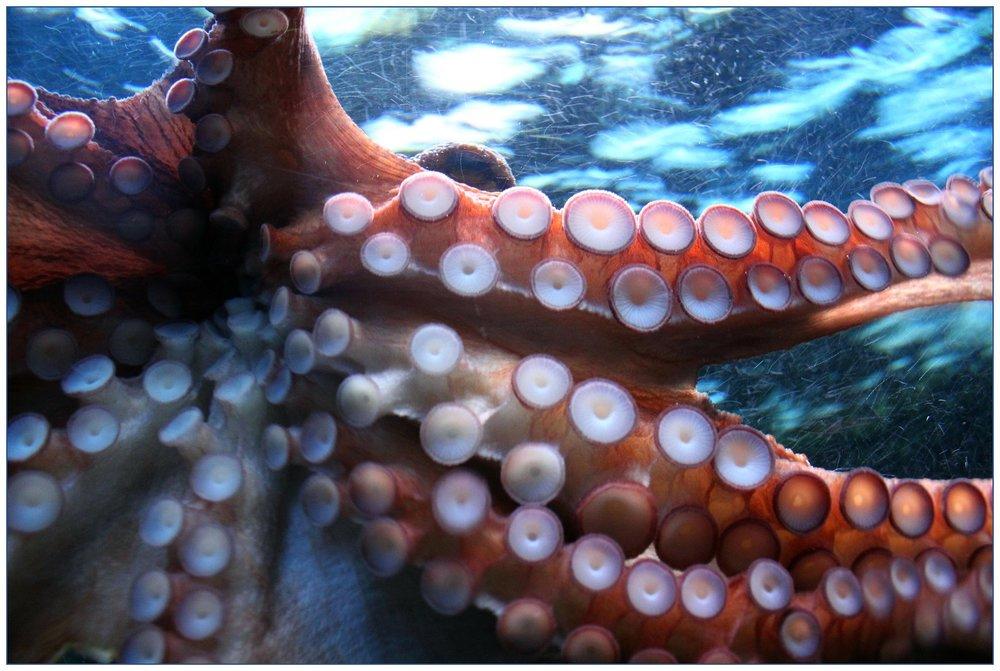 octopus-250101_1920.jpg