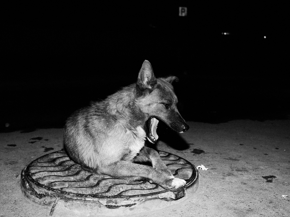 CN_Street_Dogs_001.jpg