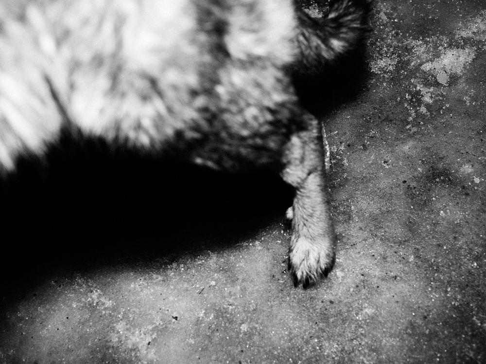 CN_Street_Dogs_003.jpg
