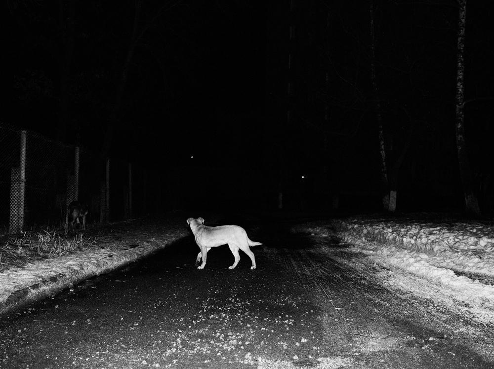CN_Street_Dogs_005.jpg