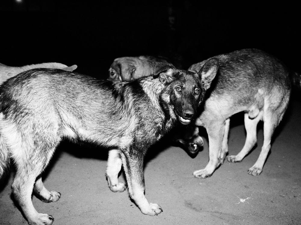 CN_Street_Dogs_008.jpg