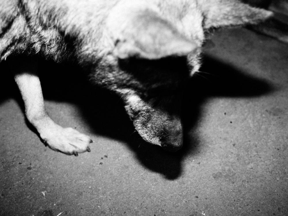 CN_Street_Dogs_009.jpg