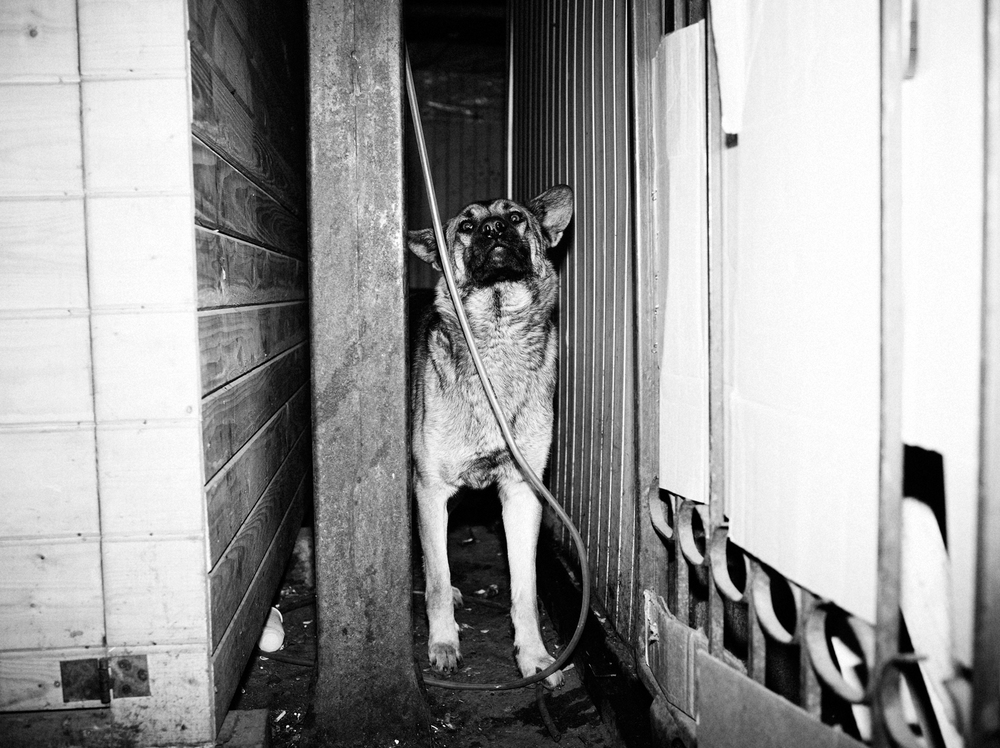 CN_Street_Dogs_011.jpg