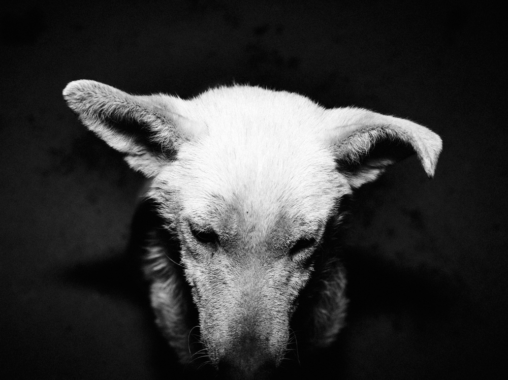 CN_Street_Dogs_012.jpg