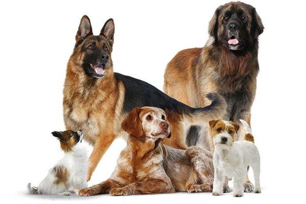 Alla hundar välkomna!