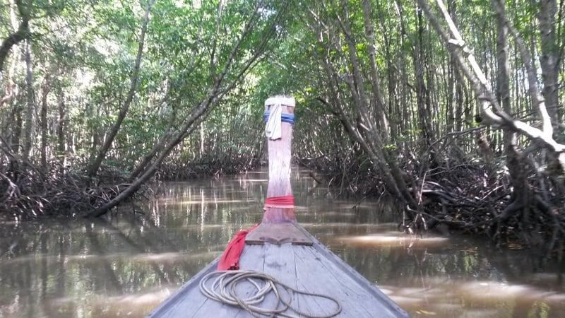 Mangroven im Flussdelta