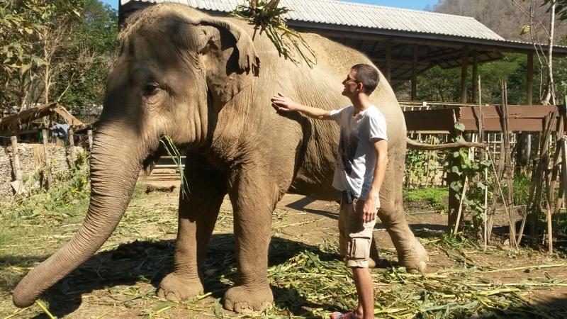 manche Elefanten dekorieren sich scheinbar gerne mit pflanzlichen Accessories...