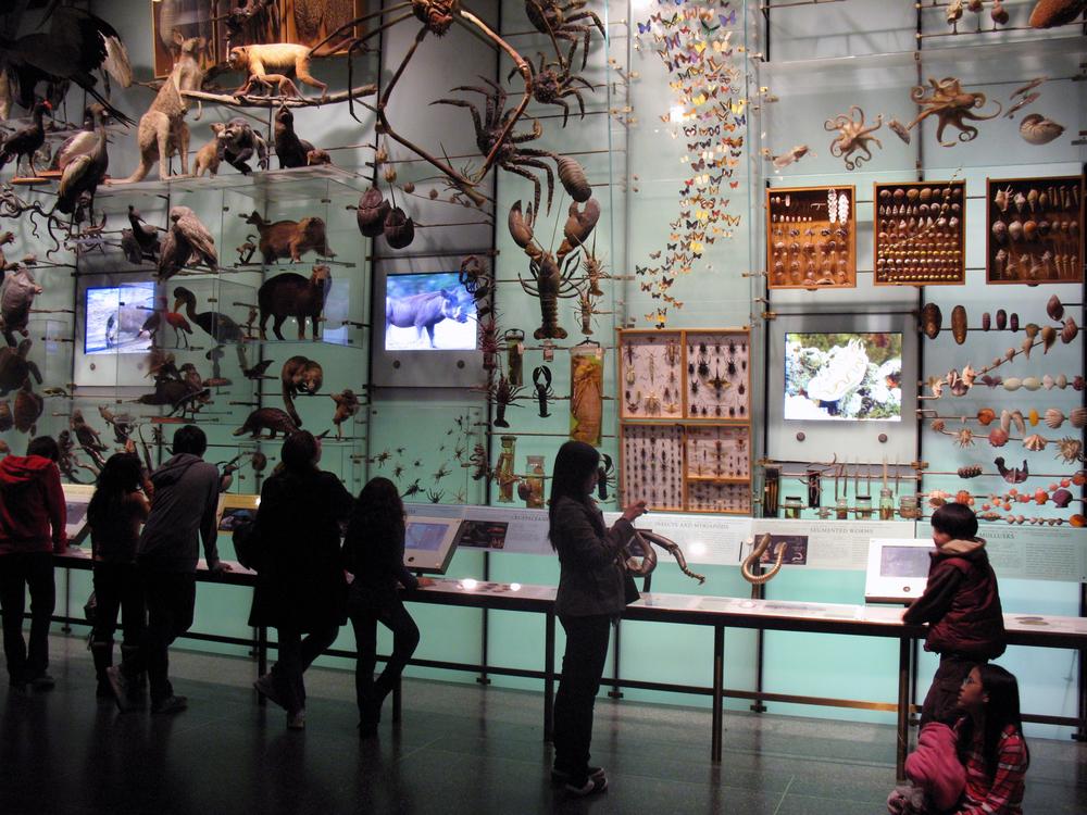 American_Museum_of_Natural_History_Biodiversity_Hall_anagoria.JPG