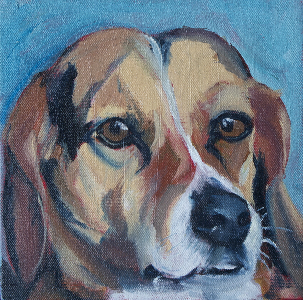 """Bruno"" 8 x8 "" oil on canvas"