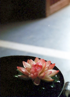 lotusflower1 web.jpg