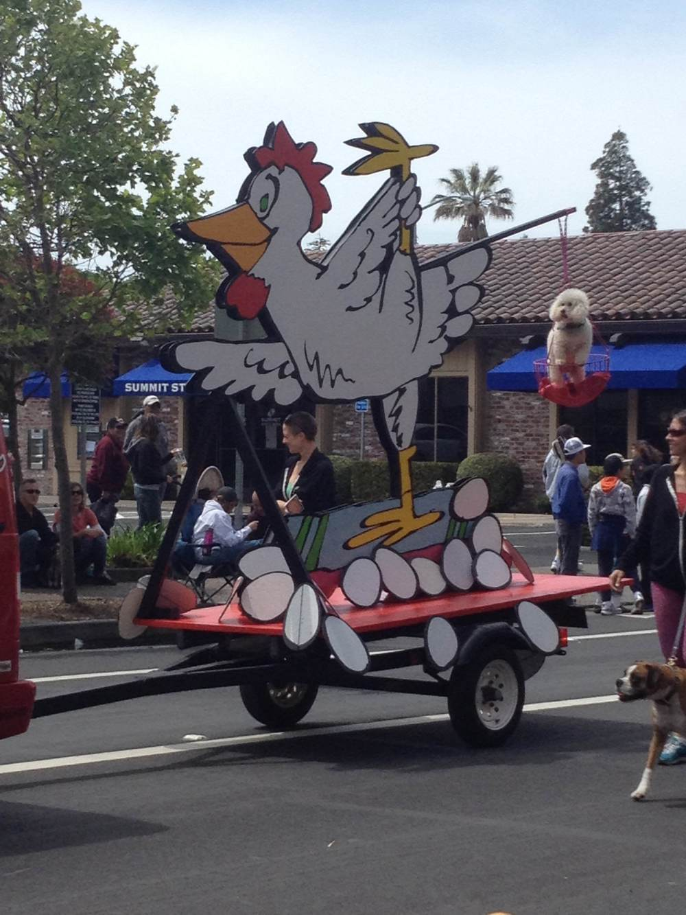STAR // Alexis Garcia-Mills The iconic Petaluma chicken and eggs float makes its debut in the parade.