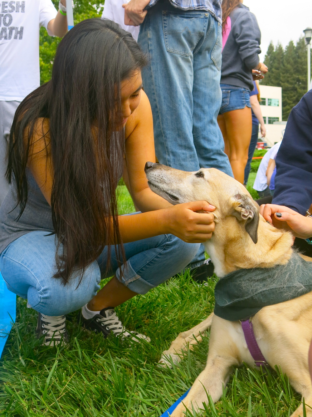 STAR // Maud Busson Sonoma State University hosted stress relief dogs Saturday with the hopes of relieving student stress going into midterms. The furry four- legged friends were welcomed onto the campus with smiles and laughter.