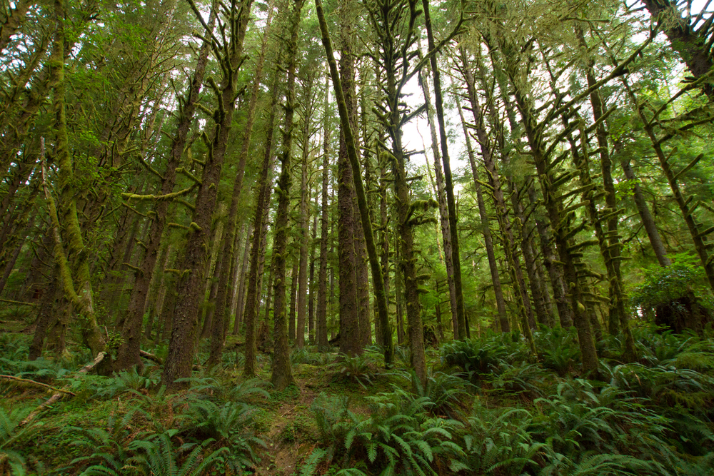 Oregon_2015-0050.jpg