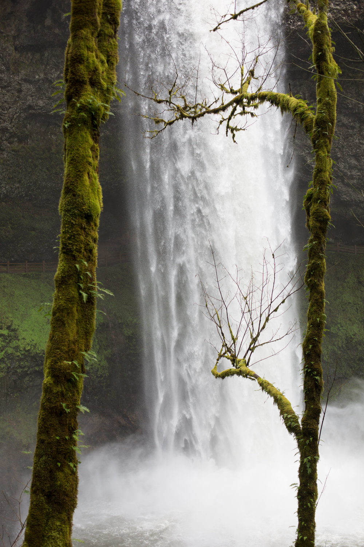 Oregon-4172.jpg