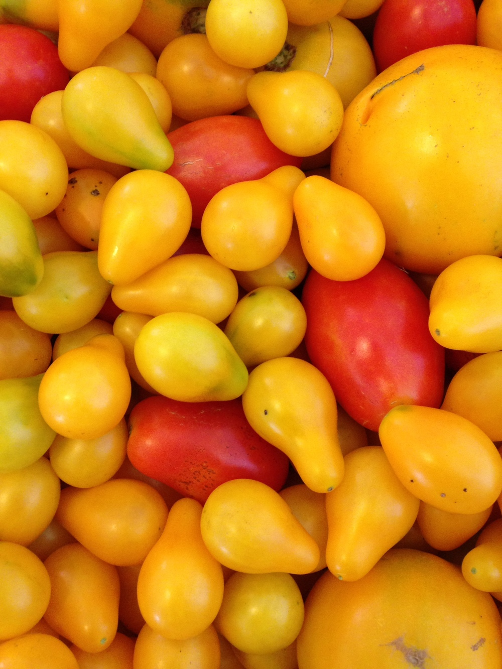 yellow red tomato.JPG
