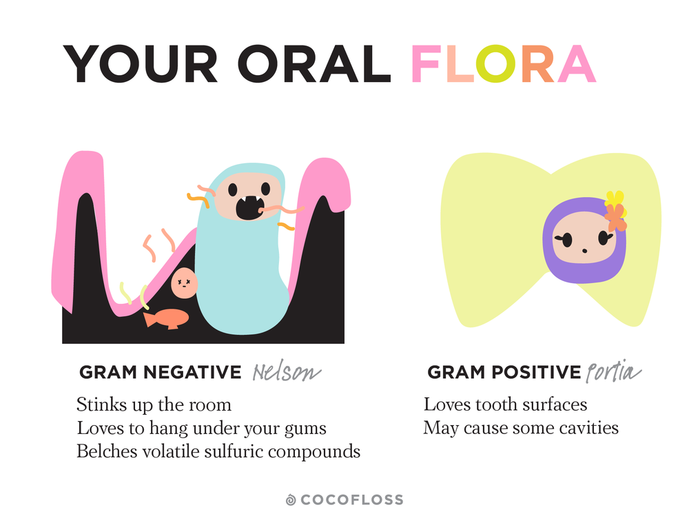 Gram negative bacteria comprise the stinky ones. They love to hang under your gum line, so it's important to floss for fresher breath.