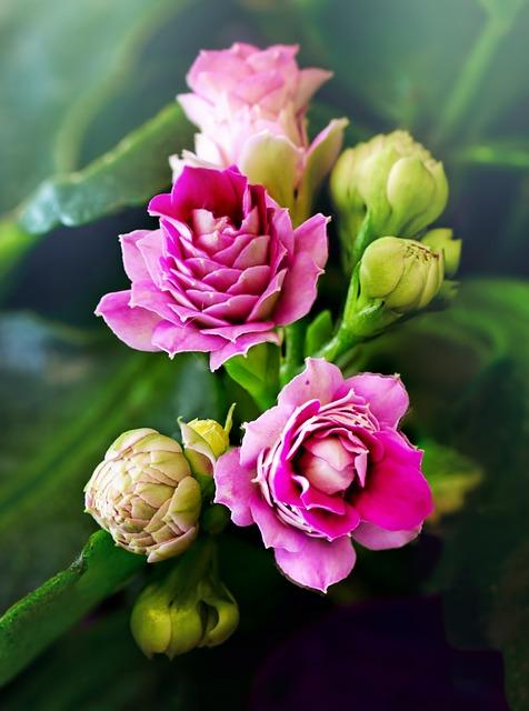 flower-3135794_640.jpg