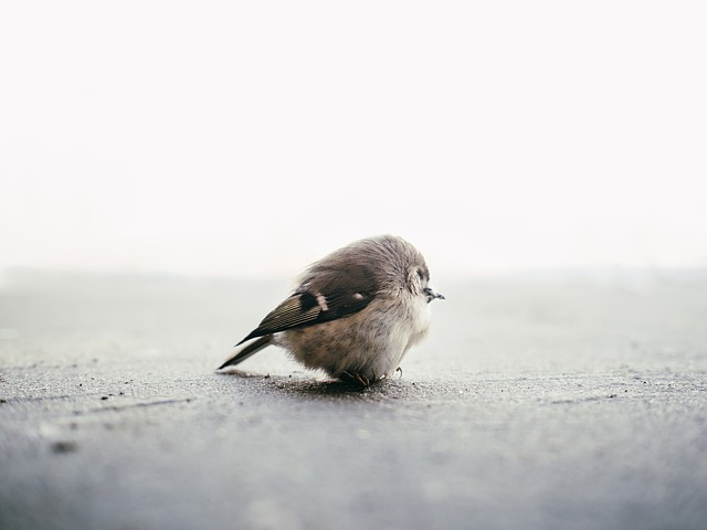 bird-820013_640.jpg