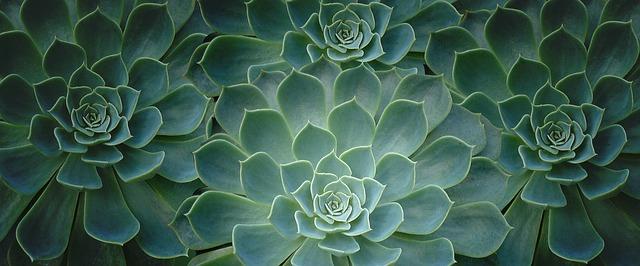 plant-2336779_640.jpg
