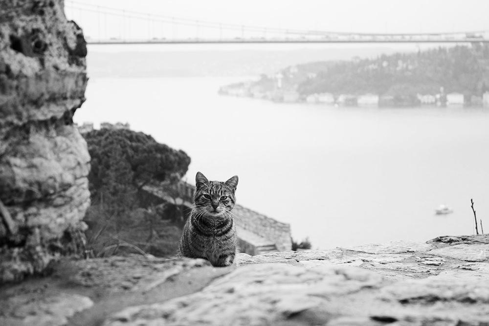 castlecat_jeffery_01.jpg