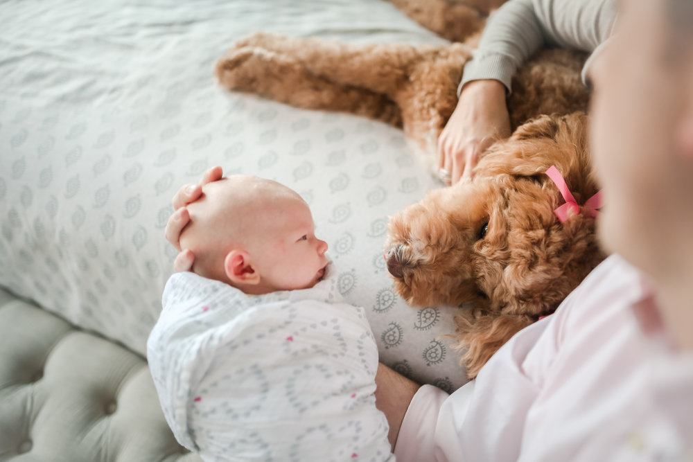 natural organic candid modern chicago newborn baby looking at family dog lifestyle photographer jenny grimm photography