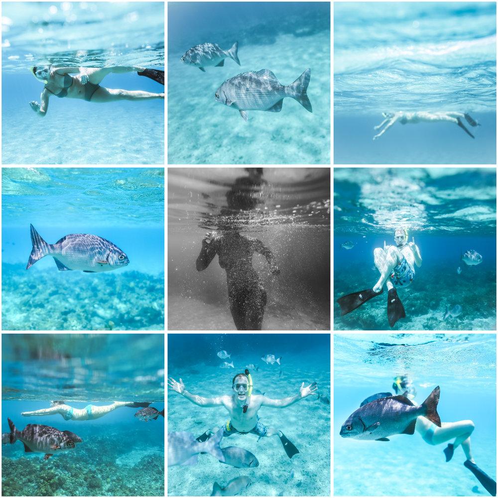 governorsbeach cayman underwater photographer jenny grimm blog 1.jpg
