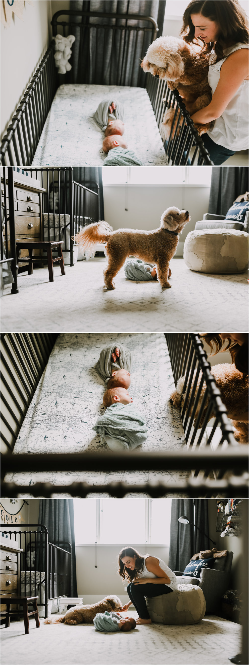 chicago newborn babies and dogs lifestyle in home photography session jenny grimm