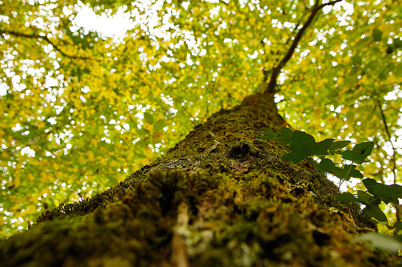 French Oak 1 original .jpg