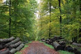 Forêt chêne 2.jpg