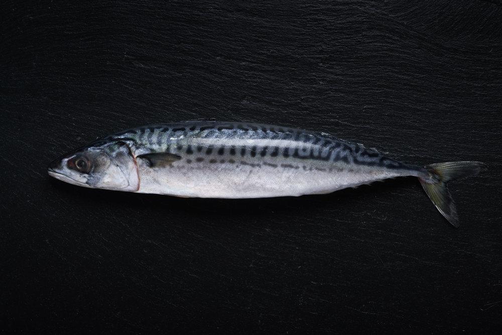 19-03-11_Mackerel_1737Website.jpg