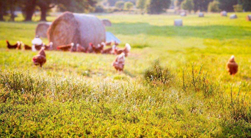 Vital Farms Pasture