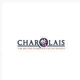 charolais.jpg