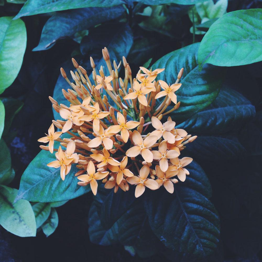 petals-and-hues