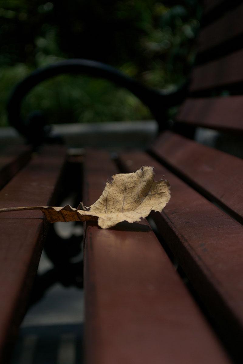 dried-leaf-autumn-park-bench