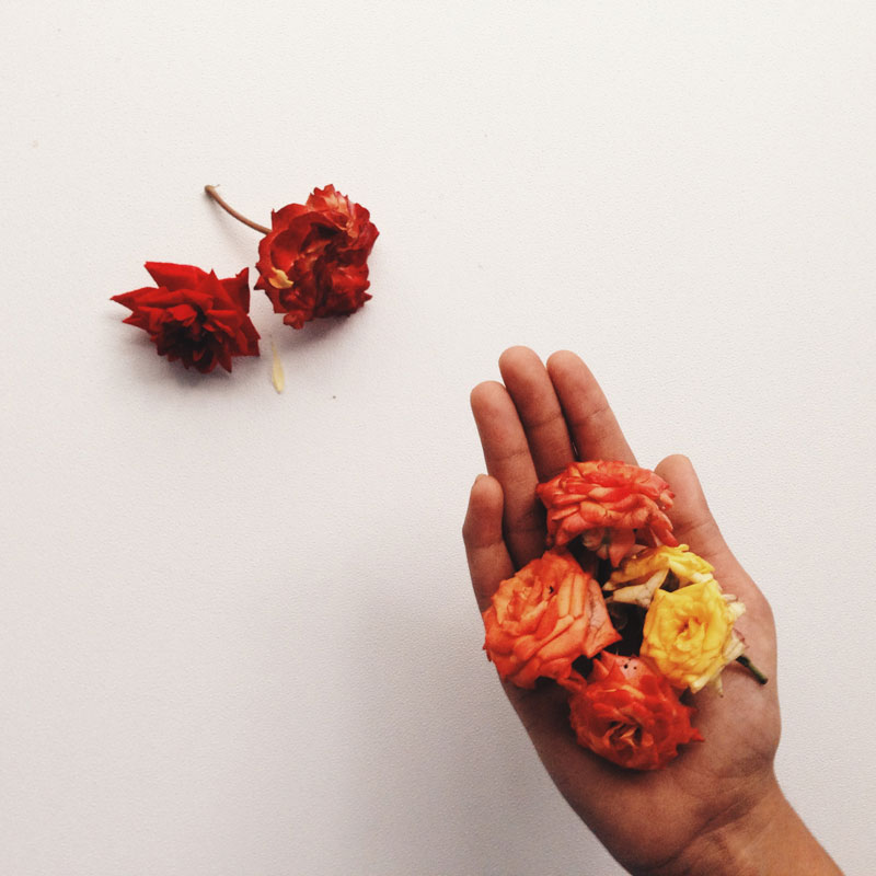 holding-roses