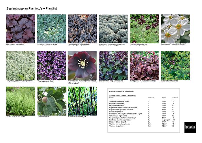 Plant Foto's